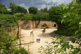 camp-des-girafes-bioparc-651685