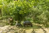 hippopotame-pygmee-bioparc-p-chabot-651690