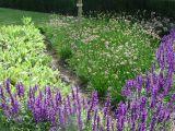les-plantes-medicinales-dont-les-parfums-embaument-le-jardin-des-simples-1280-250041