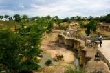 vallee-des-rhinoceros-bioparc-884741-1038253