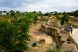vallee-des-rhinoceros-bioparc-884741